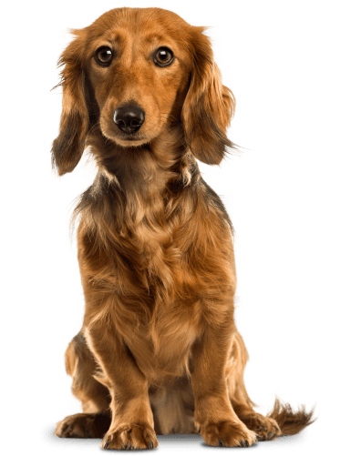 Cute_Dog_PNG_Clip_Art-2488a